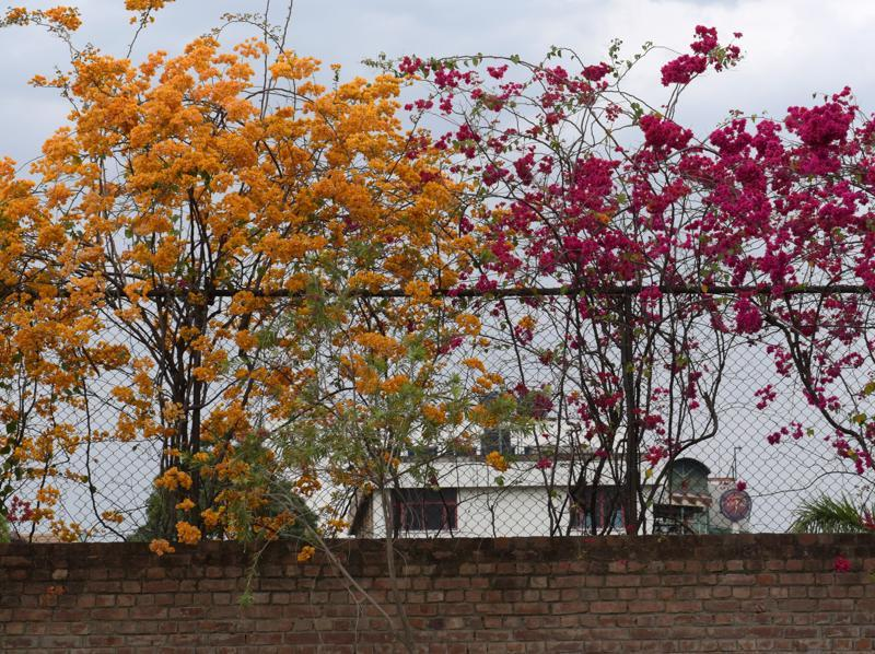 Spring spells a riot of colours in Chandigarh. (sanjeev sharma/HT)