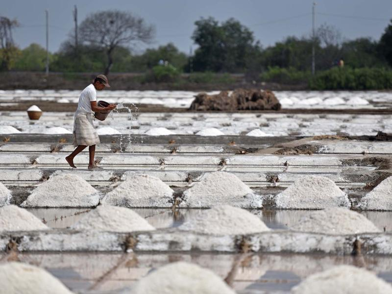 As  the salt crystallises in these beds, it is heaped up, ready to be moved.  Each batch takes about  15 days to make. (Pratham Gokhale)