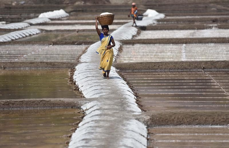 Women and men  have to carry baskets of salt on their heads  to the  storage points. (Pratham Gokhale)