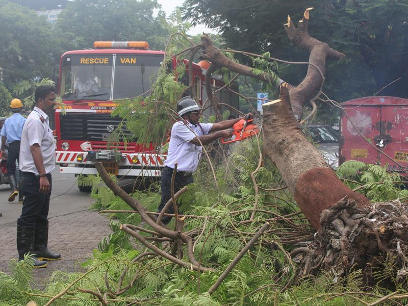 A fire brigade official cuts a fallen tree after a heavy spell brought it down in Vashi.  (Satyabrata Tripathy)