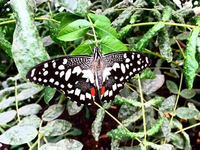 Alia Bhatt took this picture of a butterfly and captioned it 'Better-fly Butterfly'. (Instagram)