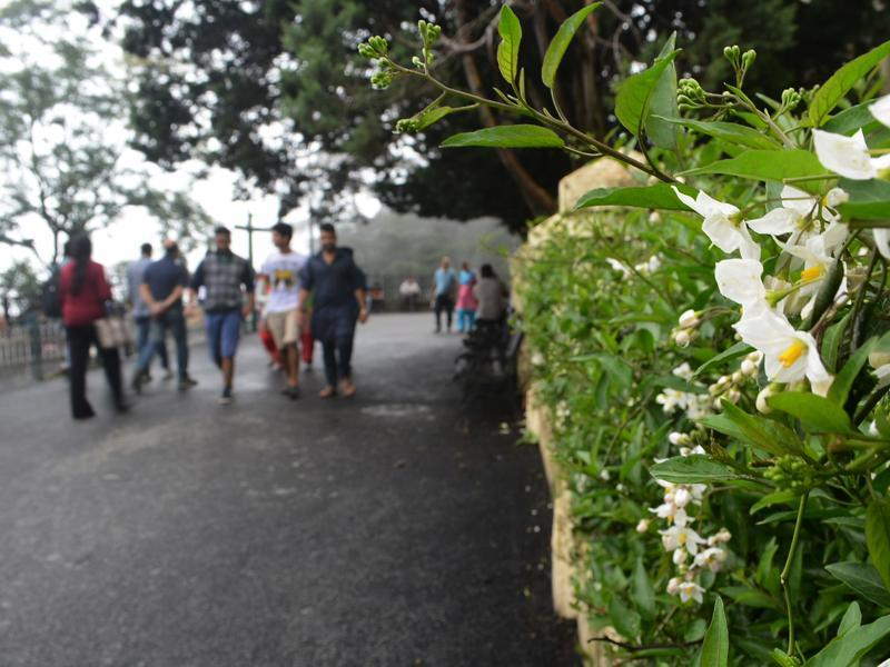 Blooming flowers and a misty pleasant weather at Mall road, Shimla on Saturday. (Deepak Sansta/HT Photo)