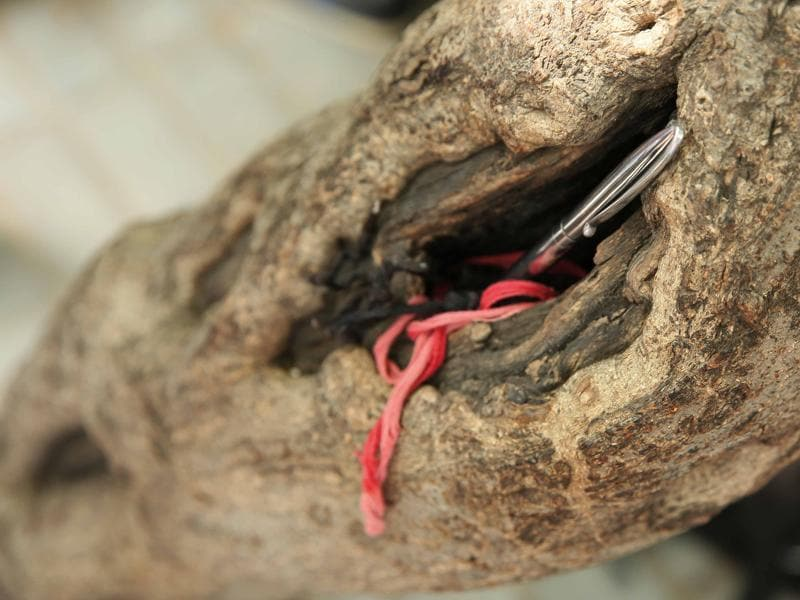Sacred wrist thread and a pen tucked inside hollow of a tree by an aspirant in Jaipur. (Himanshu Vyas/ Hindustan Times)