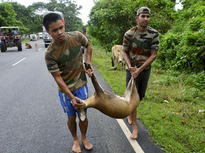 Forest officials carry a deer after it was rescued from flooded Kaziranga National Park on Monday. (PTI Photo)
