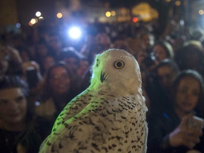 An owl is pictured next to people queueing up to purchase copies of the book at Lello in Northern Portugal. The bookstore has ordered 5,000 copies of the new book.  (AFP)