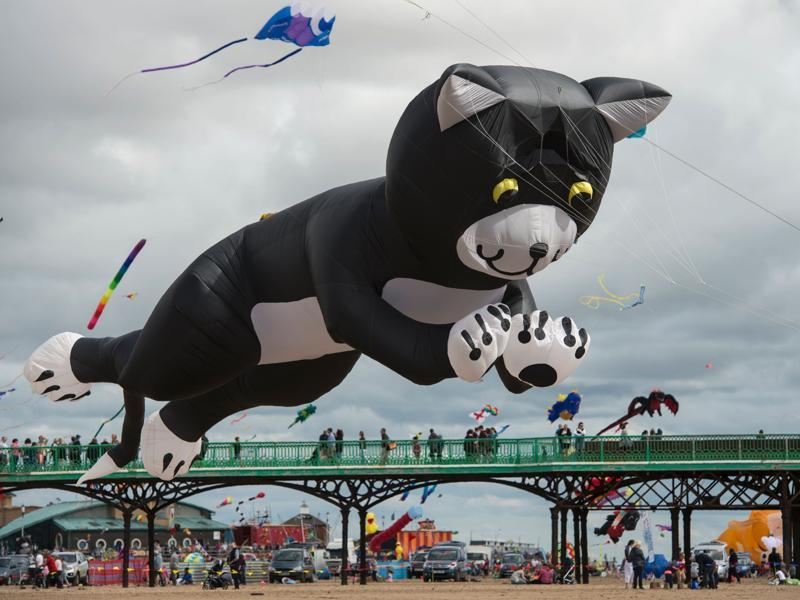 The major attractions in this edition included Oscar — the world's largest teddy bear kite, along with a giant inflatable octopus, flying cows, dogs and hippos.  (AFP)