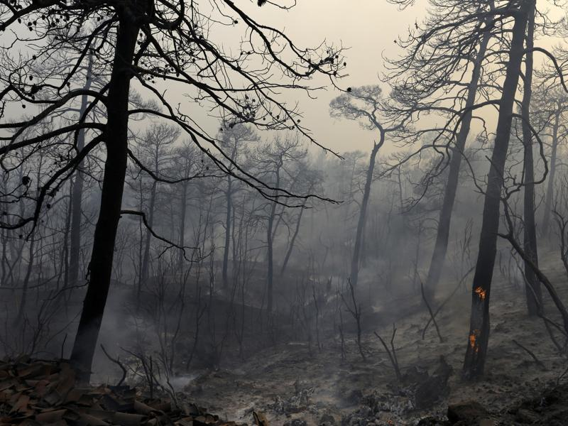 Fire burns trees at the village of Limni on the island of Evia. (AP Photo)