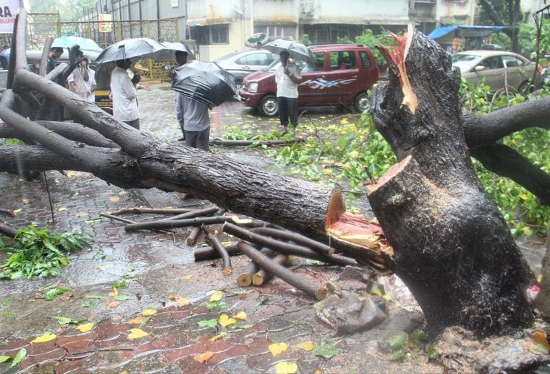 Mumbai, India - 5 Aug. 2016: Tree collapsed at Dr.Ambedkar Road,Khar  due to heavy rain  on Friday  (Pramod Thakur)