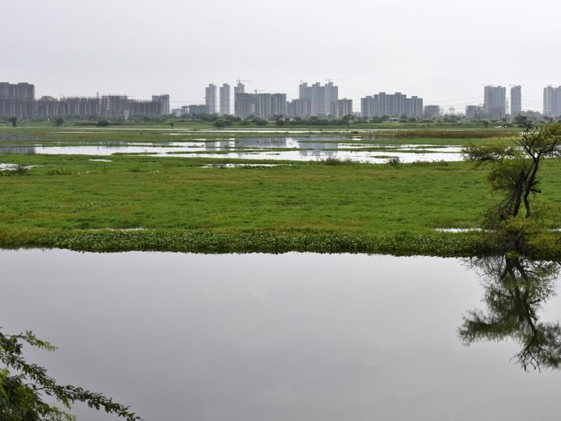 The Najafgarh drain, the longest drainage system of Delhi, has become an alternative wetland for resident and migratory water birds. (Vipin Kumar/HT Photo)