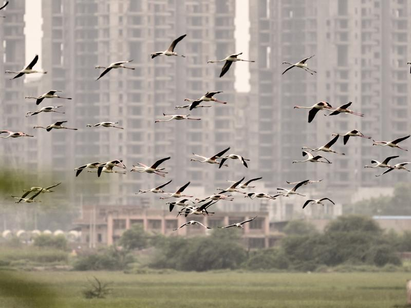 Less rainfall, rapid urbanisation and construction activities in its vicinity is causing the wetland to dry up. Rapid real estate growth on the wetland fringes is also jeopardising the future of this wetland and the birds fauna that depends on it. (Vipin Kumar/HT PHOTO)