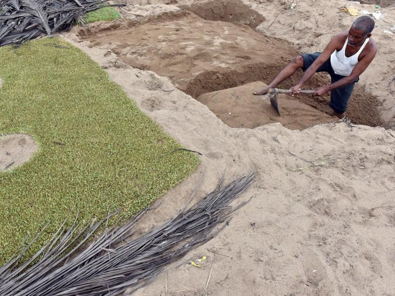 A farmer readies a plot for sowing. (Pratham Gokhale)