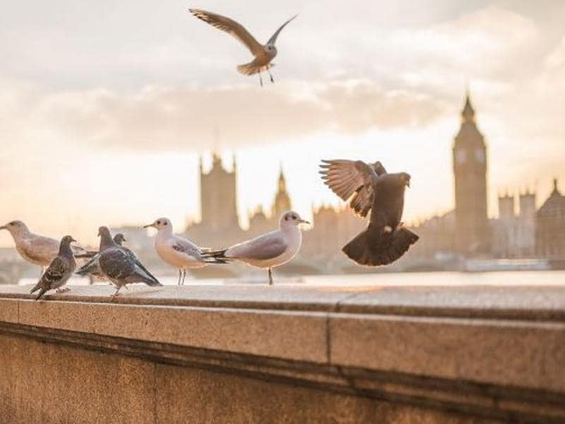Amala Paul channels her inner peace through these pigeons and seagulls in London. (Dreamcatcher_ams/Instagram)