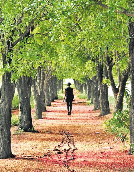 WALK IN THE WOODS: Chandigarh is known for its lush lanes and landscaping. It's best kept secret, however, is the spots of solitude. (Photo: Yashinder Bahga)