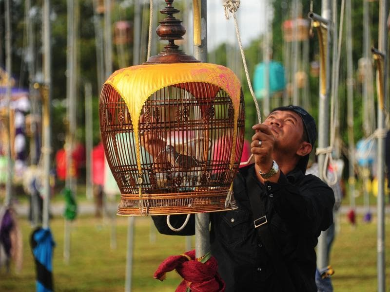 Every year Thailand holds one of its biggest bird-singing contests, which takes place in the southern province of Narathiwat. A man hoists a cage with a zebra dove during the contest in Thailand's Narathiwat on September 20, 2016.  (AFP)