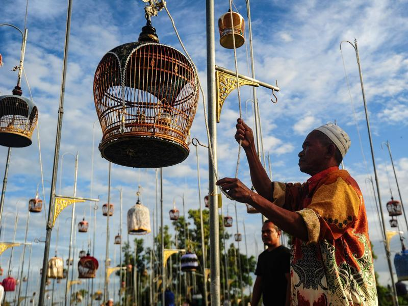 The birds are put in ornate bamboo cages which are covered with bright, coloured fabric.  A man hoists a cage with a zebra dove during the contest. (AFP)