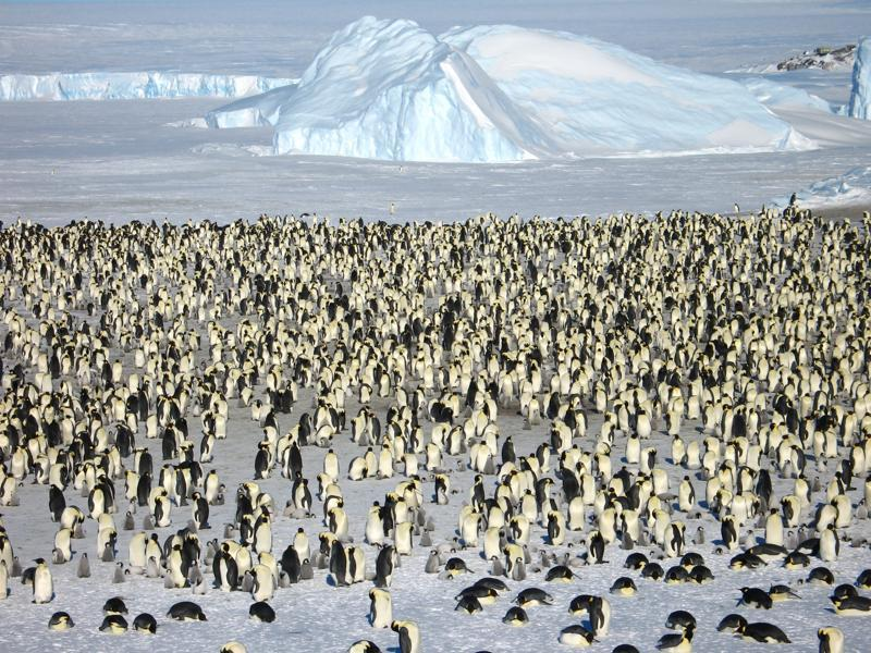 What's more? It feeds them gourmet meals between their encounters with thousands of Emperor penguins.  (AFP)