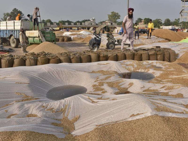 Workers removing rainwater from paddy in the Attari village grain marker, 25km from Amritsar, on Wednesday, October 5. (Gurpreet Singh/HT Photo)