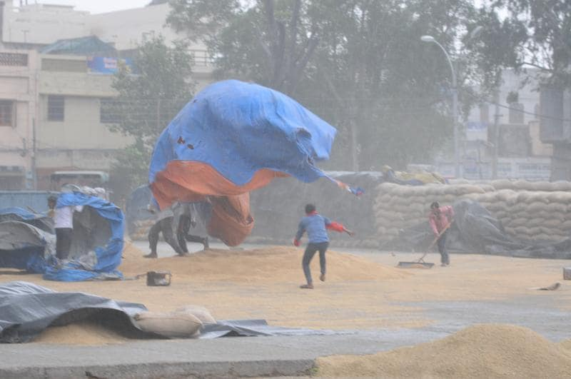 At New Grain Market, Jalandhar, after rain on Wednesday. (Pardeep Pandit/HT Photo)