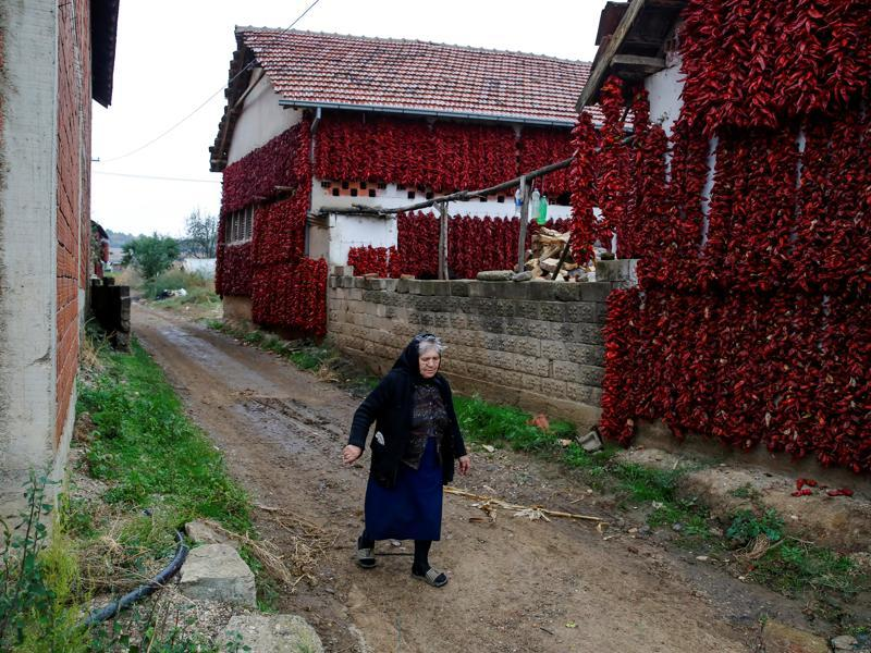 From there, it moved across Iberia to Africa and Asia before reaching Central Europe with the Ottomons. A woman walks along a road as bunches of paprika hang on the walls in Donja Lakosnica. (REUTERS)