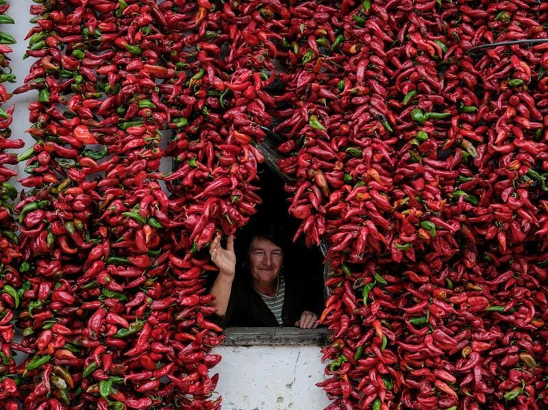 A woman poses for a picture as bunches of paprika hang on the walls of her house to dry in the village of Donja Lakosnica, Serbia, October 6, 2016.  (REUTERS)