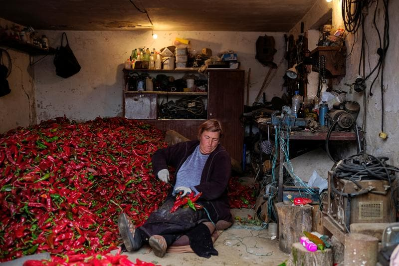 The use of paprika in Hungarian cuisine did not become famous till the 19th century. A Serbian woman prepares bunches of paprika to dry. (REUTERS)