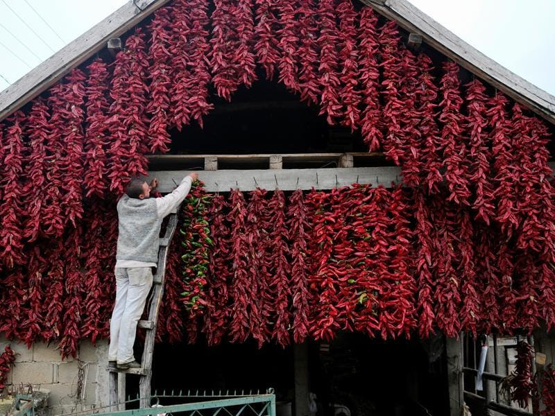 Often associated with Hungarian and Serbian cuisines, paprika, originally belongs to Central Mexico. A man hangs a bunch of paprika on the wall of his house in Donja Lakosnica.  (REUTERS)