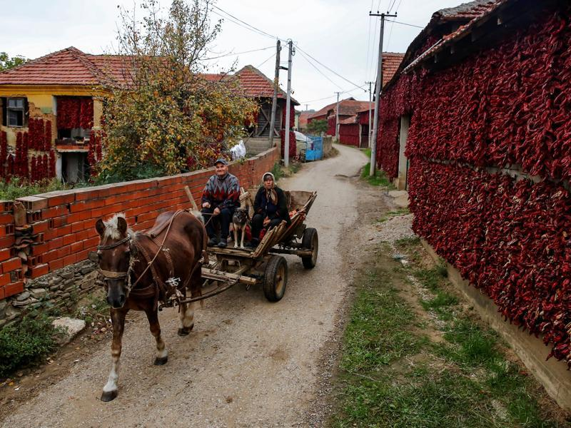 It was brought to Spain in the 16th century. People ride a carriage pulled by a horse as bunches of paprika hang on the walls of houses in Donja Lakosnica. (REUTERS)