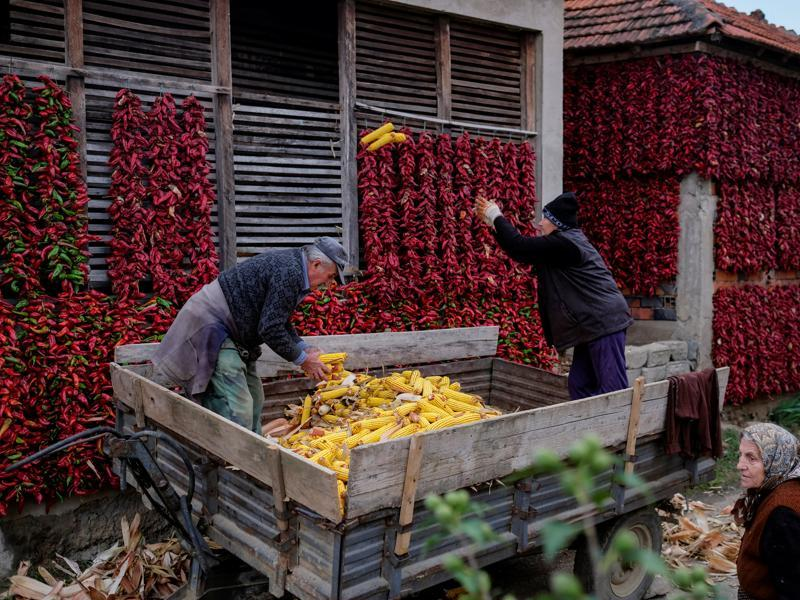 Paprika is a staple of Serbian food too. Serbs work with corns as bunches of paprika hang on the walls of houses to dry. (REUTERS)