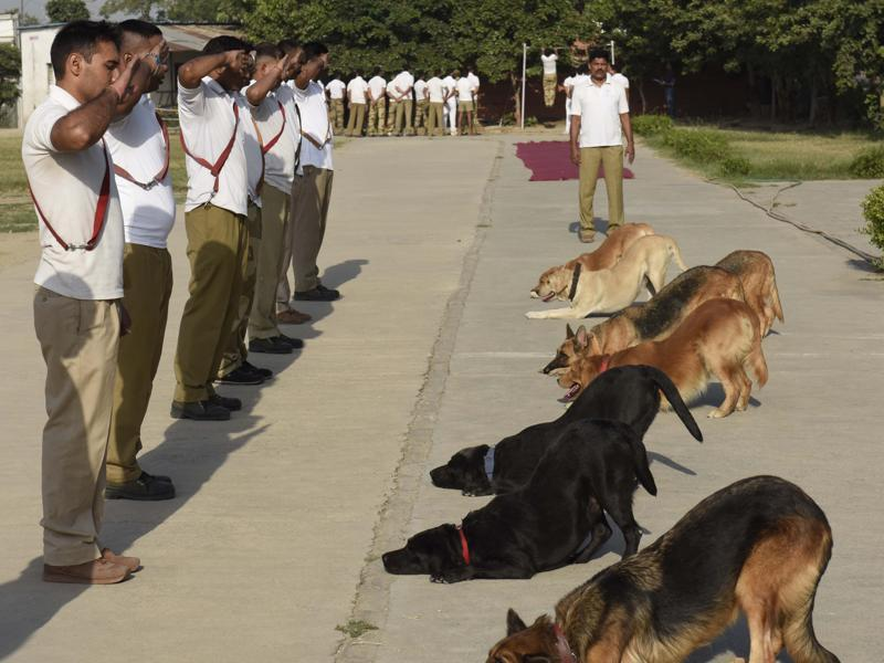 The CISF dog squad giving training to its dogs at Shastri Park in New Delhi on  October 13, 2016. (Sushil Kumar/HT PHOTO)