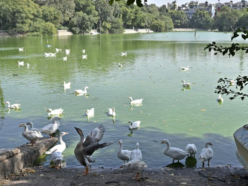 A view of Deer Park, Hauz Khas Village which is also temporarily closed for visitors as a precautionary measure after eight birds died.  (Arun Sharma/HT PHOTO)