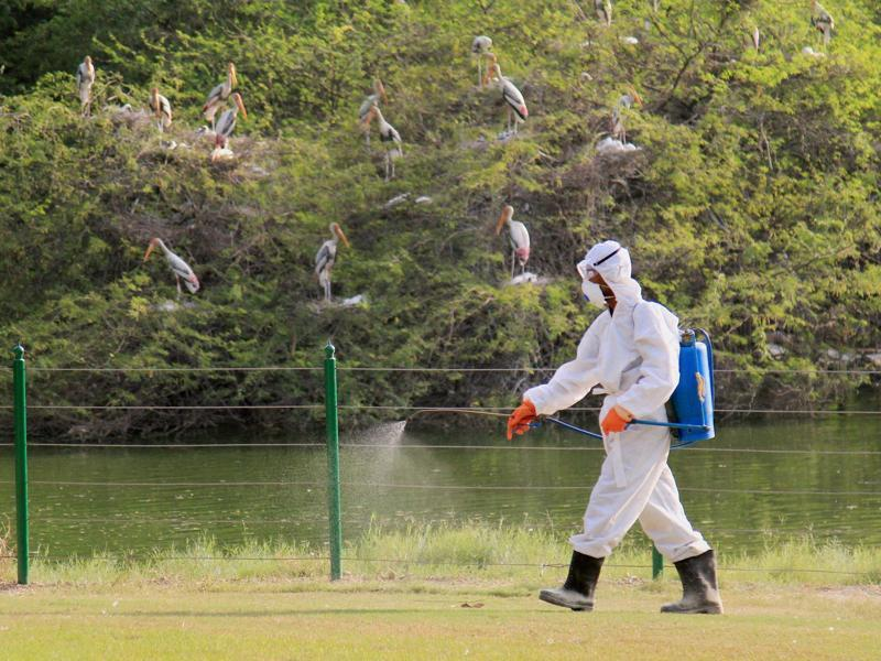 A zoo staff sprays chemicals near a rosy Pelican enclosure to prevent amid a bird flu (H5N1 avian influenza virus) scare in Delhi, on Saturday.  (PTI)