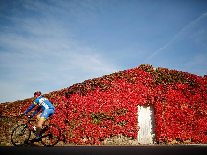 A man rides a bicycle past a house covered with Virginia creeper on an autumn day in Saint-Fiacre-sur-Maine, western France, November 1, 2016.  (REUTERS/Stephane Mahe)