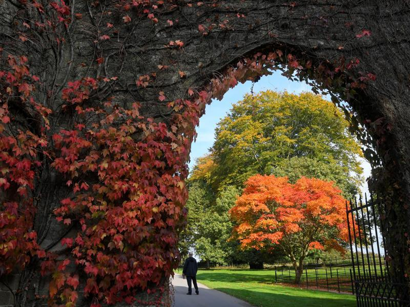 Visitors view the autumn foliage and colours in the gardens and estate at Stourhead in south west Britain, October 21, 2016.  (REUTERS/Toby Melville)