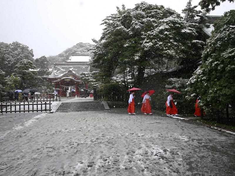 Shrine maidens walk in the snow at the Tsurugaoka Hachimangu Shrine in Kamakura. (AP Photo)