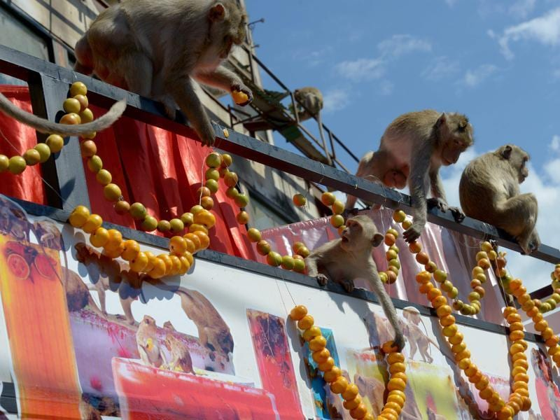 Monkeys eat fruits and vegetables which were displayed in a van near an ancient temple during the annual