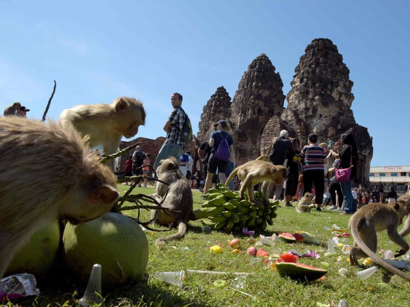 Monkeys eat fruits at an ancient temple during the annual