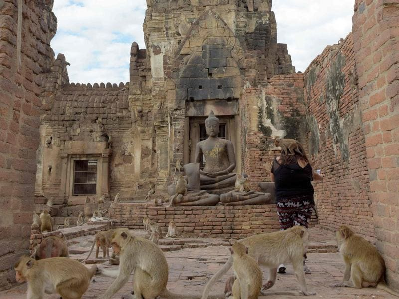 Monkeys jump up onto a tourist at an ancient temple during the annual