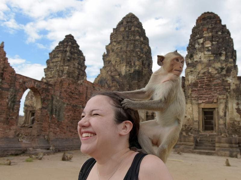 A monkey prepares to jump off tourist Katie Myers of the US at an ancient temple during the annual