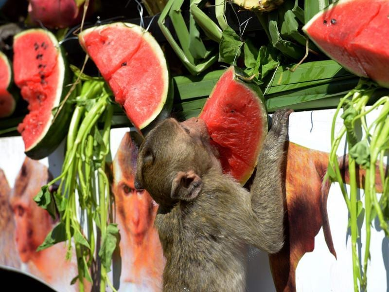 A monkey eats a watermelon from a van near an ancient temple during the annual