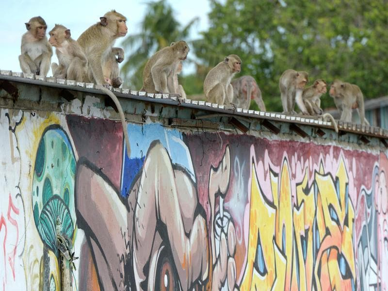 Monkeys sit above a wall with graffiti near an ancient temple during the annual