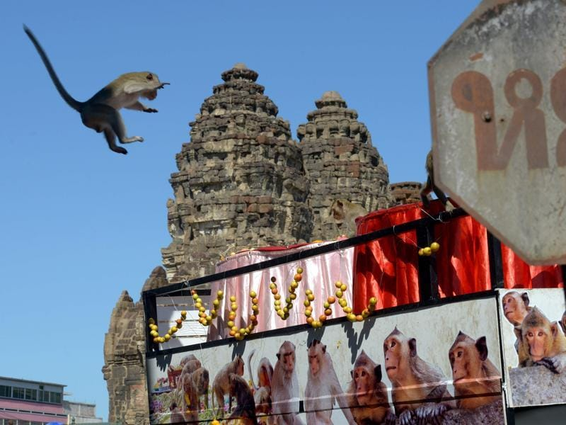 A monkey jumps onto a van loaded with fruits and vegetables near an ancient temple during the annual