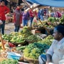 Loud and clear: Vegetable vendors in Ludhiana resort to CDs
