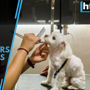 Milk spas, fur jackets: Why are Hong Kong dog owners pampering their pe...