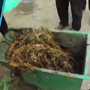 Watch video: 85 kg of plastic waste removed from bull's stomach in Maha...
