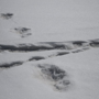 'Indian Army tweets about Yeti footprint, Twitter isn't impressed