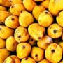 Mango diplomacy: How the first crate of Pakistani mangoes impacted Mao's China
