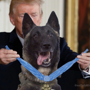 'Every dog has his day', Trump tweets doctored image of dog that helped in Baghdadi mission