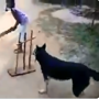 Dog plays cricket with kids, people call it 'best fielder of year'. Watch
