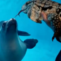 Get a partner who looks at you the way this sea lion looks at this lizard