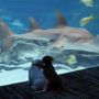 Sweet video of dogs' aquarium visit will brighten up your day